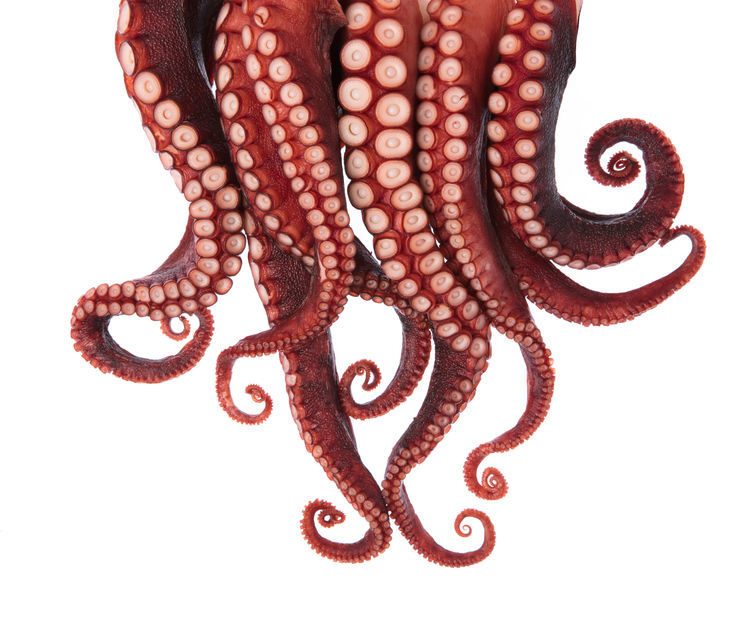 Stock image of octapus tentacles