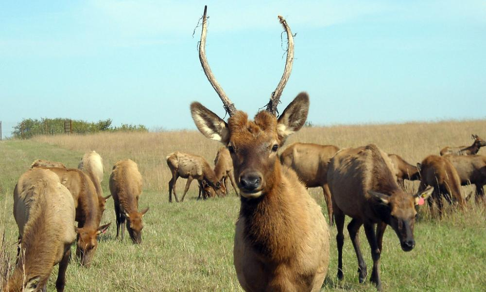 Using Cerebro to manage an Elk Cluster